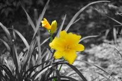 yellow.grey