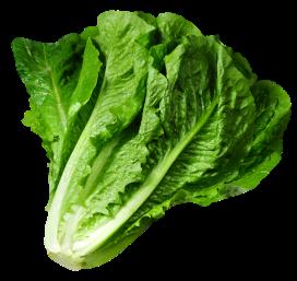 lettuce_1_2